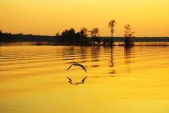 Puesta del sol bajo el lago Imágenes de archivo libres de regalías