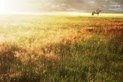 Puesta del sol bajo el prado imagenes de archivo