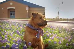 Puesta del sol bonita del perrito Foto de archivo libre de regalías