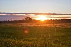 Puesta del sol brillante sobre el prado letón Fotografía de archivo libre de regalías