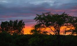 Puesta del sol brillante vista a través de árboles Fotos de archivo libres de regalías