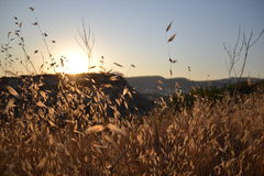 Puesta del sol caliente Fotografía de archivo