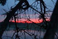 Puesta del sol carmesí y ramas de árbol muertas Imagen de archivo