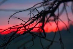 Puesta del sol carmesí y ramas de árbol muertas Fotografía de archivo