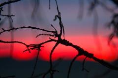 Puesta del sol carmesí y ramas de árbol muertas Foto de archivo libre de regalías