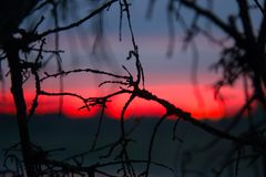 Puesta del sol carmesí y ramas de árbol muertas Fotos de archivo libres de regalías