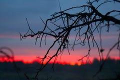 Puesta del sol carmesí y ramas de árbol muertas Foto de archivo