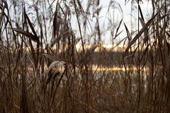 Puesta del sol, charca y detalle de lámina fotografía de archivo libre de regalías