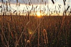 Puesta del sol del cielo a través de una silueta de la hierba Fotografía de archivo