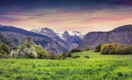 Puesta del sol colorida de la primavera en el prado alpino del flor Imagen de archivo libre de regalías