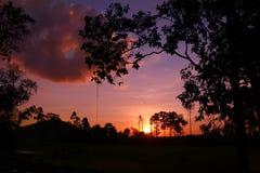 Puesta del sol colorida del cielo en el bosque Fotografía de archivo