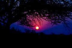 Puesta del sol colorida en el arbusto africano Fotos de archivo libres de regalías