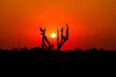 Puesta del sol colorida en el arbusto africano Fotografía de archivo