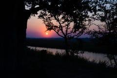 Puesta del sol colorida en el arbusto africano Silueta de los árboles del acacia en contraluz Frío entonado, cielo claro púrpura  Fotos de archivo libres de regalías