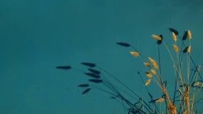 Puesta del sol colorida en el mar, el azul y el campo y la sombra de un sol fuerte que va abajo cerca de Ravena Imagen de archivo