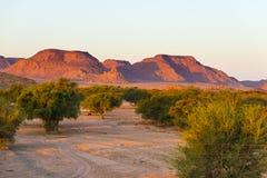 Puesta del sol colorida sobre el desierto de Namib, Namibia, África Montañas, dunas y silueta de los árboles del acacia en contra Foto de archivo