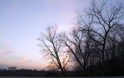 Puesta del sol colorida y árboles Imagen de archivo