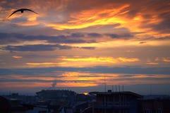 Puesta del sol colorida y pájaro negro sobre una ciudad Foto de archivo libre de regalías