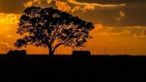 Puesta del sol completa del árbol Fotos de archivo libres de regalías