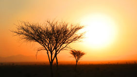 Puesta del sol con el árbol Imagen de archivo