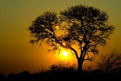 Puesta del sol con el árbol Fotos de archivo