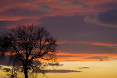Puesta del sol con el árbol Fotografía de archivo