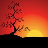 Puesta del sol con el árbol de pino. Ilustración del vector. ilustración del vector