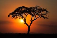 Puesta del sol con el árbol silueteado Fotos de archivo
