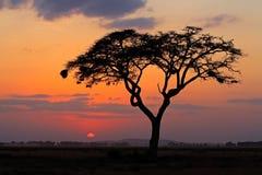 Puesta del sol con el árbol silueteado Foto de archivo libre de regalías