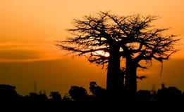Puesta del sol con el baobab Foto de archivo