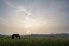 Puesta del sol con el caballo Imagen de archivo libre de regalías