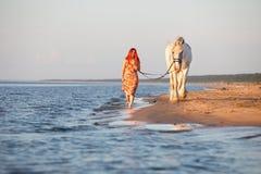 Puesta del sol con el caballo en la playa Foto de archivo