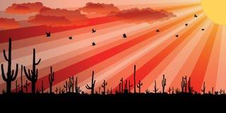 Puesta del sol con el cacto del Saguaro. ilustración del vector