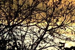 Puesta del sol con el cielo y las ramas anaranjados Imagen de archivo