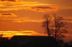 Puesta del sol con el fondo del árbol Fotografía de archivo
