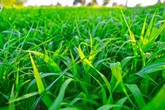 Puesta del sol con el fondo natural de la falta de definición de la hierba verde del paisaje Imagen de archivo libre de regalías