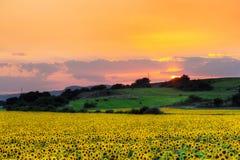 Puesta del sol con el girasol imágenes de archivo libres de regalías