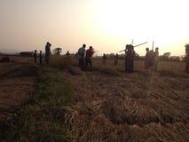 Puesta del sol con el granjero Fotografía de archivo libre de regalías