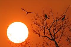 Puesta del sol con el pájaro de vuelo Imagen de archivo libre de regalías