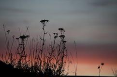 Puesta del sol con la flor Fotos de archivo libres de regalías