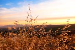 Puesta del sol con la hierba amarilla en Western Cape, Suráfrica Imágenes de archivo libres de regalías