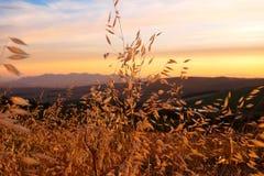 Puesta del sol con la hierba amarilla en Western Cape, Suráfrica Fotografía de archivo libre de regalías