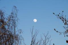 Puesta del sol con la luna y el cielo claro con los árboles Fotos de archivo libres de regalías