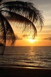 Puesta del sol con la palmera Imagen de archivo