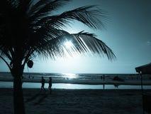 Puesta del sol con la palmera Fotografía de archivo libre de regalías