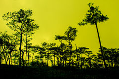 Puesta del sol con la silueta de los pinos negros Imagen de archivo
