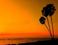 Puesta del sol con la silueta del palmtree Foto de archivo