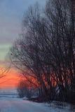 Puesta del sol con la sombra del árbol Fotografía de archivo