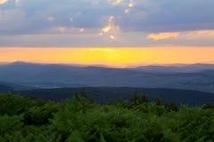 Puesta del sol con la vegetación verde Fotografía de archivo libre de regalías