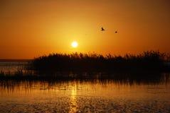 Puesta del sol con las aves marinas Foto de archivo libre de regalías